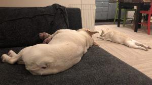 今回、退院時にじょにおが出張不在で、犬達は預けてあり、翌月曜に戻ってきた。